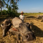 Investors drawn by Myanmar agriculture