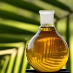 Indonesia to be largest palm oil consumer