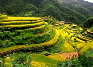 Brunei invests in Philippine rice plantations