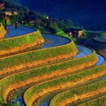 Philippines abandons rice self-sufficiency plan