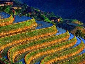 Philippine-rice-terrace
