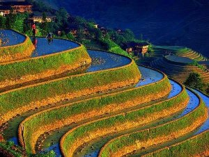 Philippine-rice-terrace