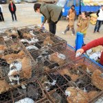 Police rescue 90 smuggled cats on Thai border