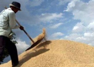 More farming subsidies approved in Thailand