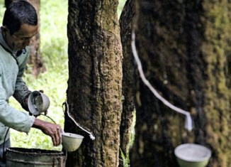 Thailand offers $1b to support rubber farmers