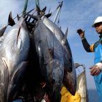 Vietnam to establish fishing business with Indonesia