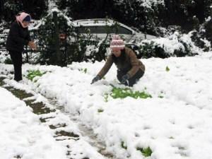 Vietnam snowfall