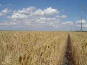 UAE and Western Australia to work on wheat issues