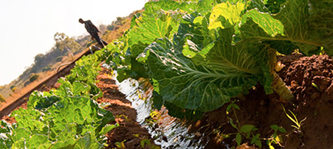 Laos, Hungary partner in agro-industries