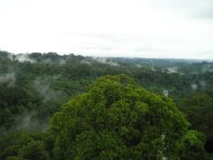 brunei-forest