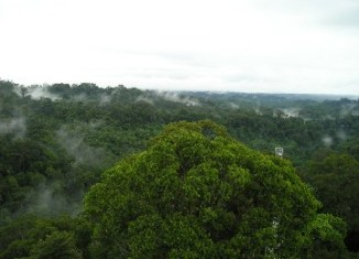 Brunei limits agricultural land use to 1% to protect tropical forests