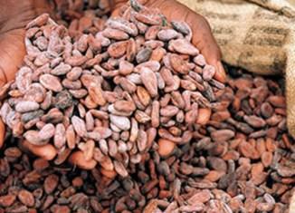 Sabah, Sarawak push cocoa planting