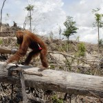 Indonesia now country with world's highest deforestation rate