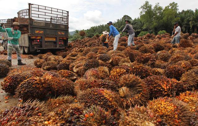 Malaysia's agro giant Felda in expansion spree