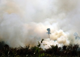 Palm oil stocks burnt by forest fires