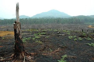 forestfire_palmoil