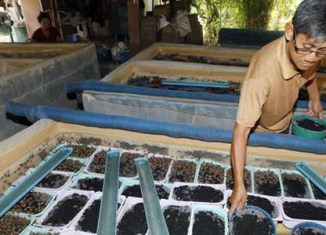 The insect farms of Thailand