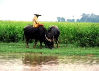 Land Rights In Cambodia