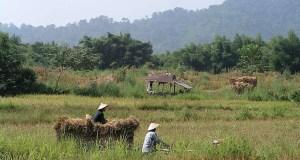 laos rural