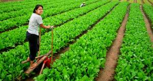 Thailand serves Myanmar solar