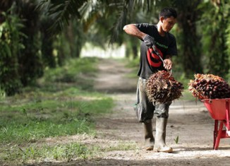 Indonesia's palm oil reserves poised to drop