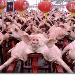 New export potential for Philippine pork