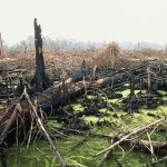 Rate of deforestation in Indonesia overtakes Brazil, says study