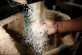 rice subsidies