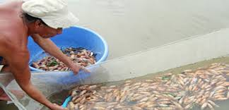 Thailand's shrimp export set to decline by half