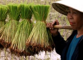 Angry Thai rice farmers rushing to Bangkok for rally