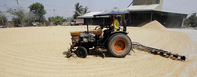 Thai farmers want less for their rice