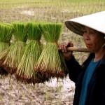 Thai junta promises to clear rice farmers' outstanding bills