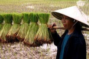 thailand-farmer