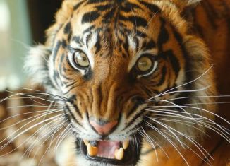 Sumatran tigers trap Indonesian men in tree for 5 days