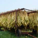 BAT doubles tobacco sourcing from Phils