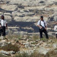 I coloni impediscono ai palestinesi di fare la  raccolta delle olive
