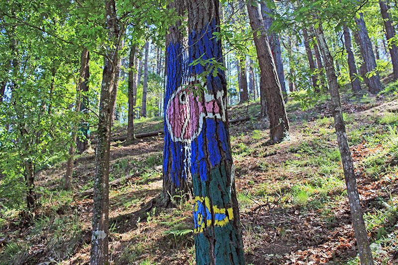 Un árbol pez en el Bosque de Oma