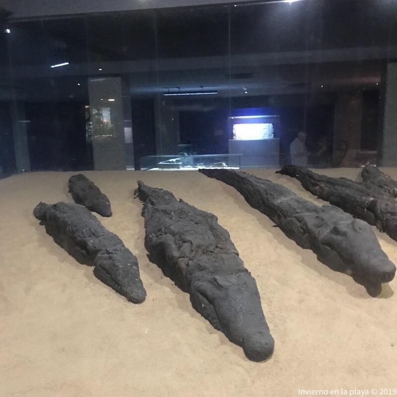 Museo cocodrilos Kom Ombo