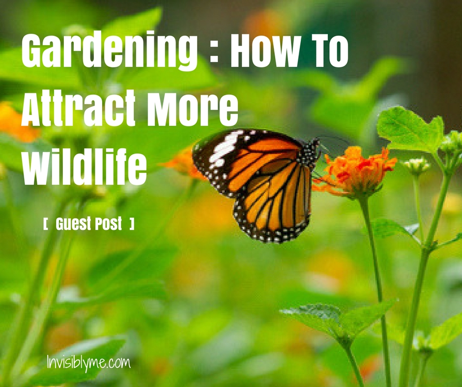 Gardening for Stress Relief – How To Attract More Wildlife