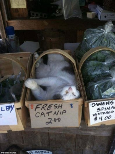 A cat in a box with a handle on it, in what looks like a garage sale type of stall. The box reads 'fresh catnip 2.00'.