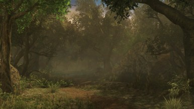 forest-campsite_noon