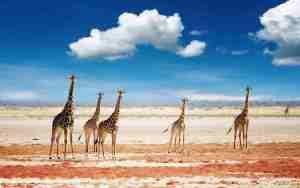 Destinos luna de miel Safari África Tanzania