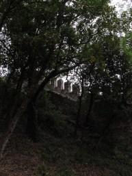 CatMam_07_2012-1
