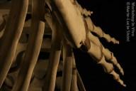 MLucSi_07_2012-12