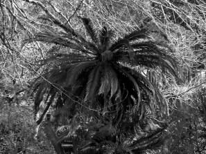 PaulaS_02_2012-4
