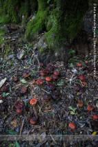 Salteado de cogumentos | Mushroom sauté