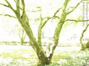 AntQueir_06_2011-4