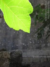 CatMam_07_2012-13