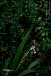 CatMor_10_2011-1