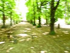 HelAlb_06_2011-7